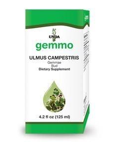 Ulmus Campestris by Unda